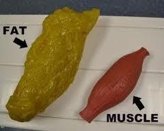 fat&muscle