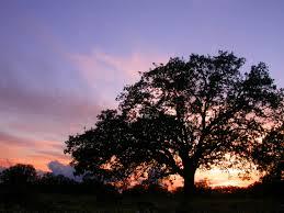 oaktree7